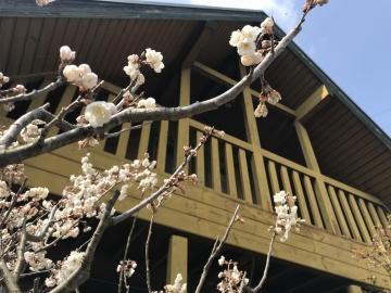 愛媛県松山市の他社施工のログハウス 17年目の化粧直し・再塗装をフォレストクルーで請け負う