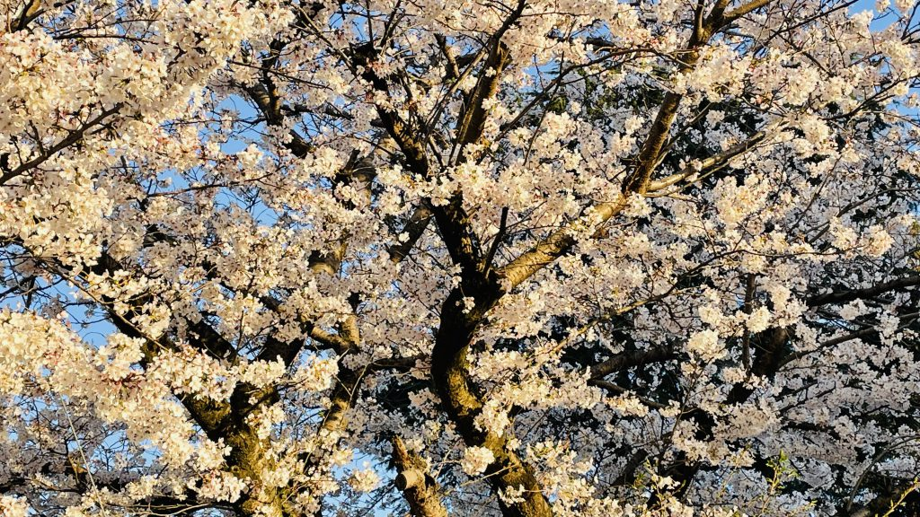 伊予郡砥部町 北欧ログハウス 桜並木を眺めるための窓